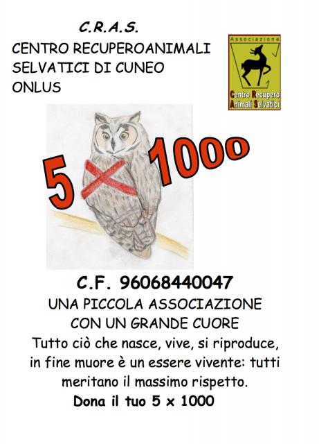 volantino 5x1000 2013